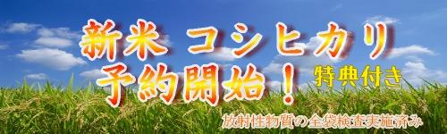 福島県 米 新米セール