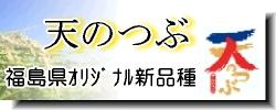福島米 天のつぶ